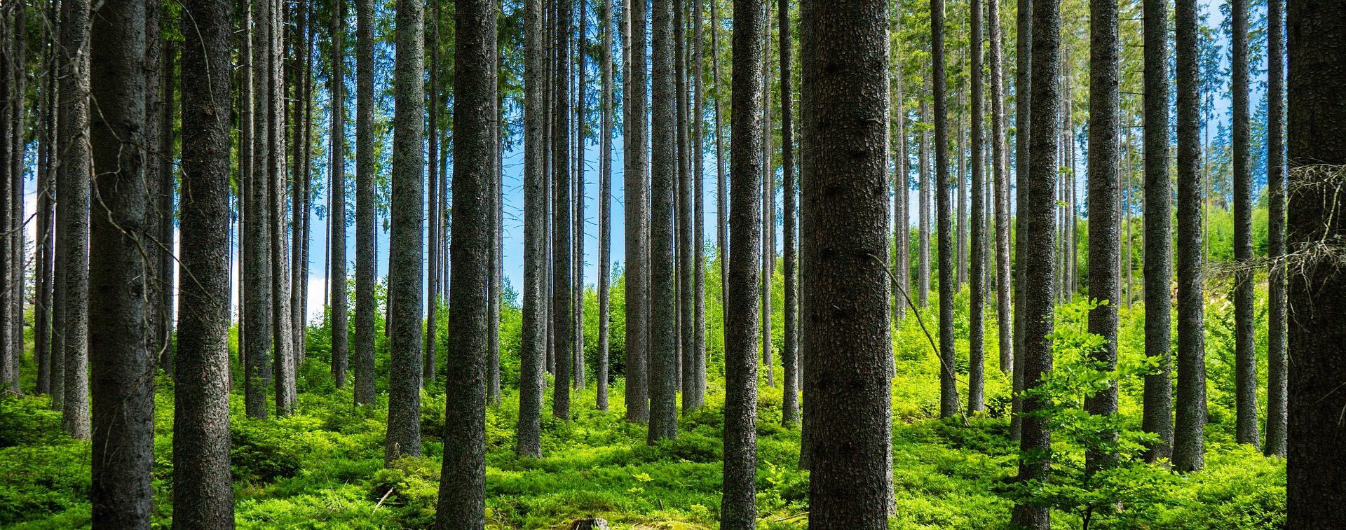 forest-5323328_1920