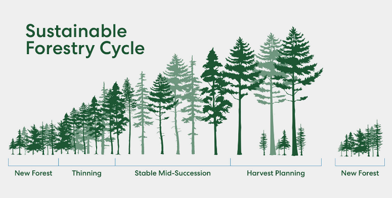 Think Wood Sustainable Forest Cycle